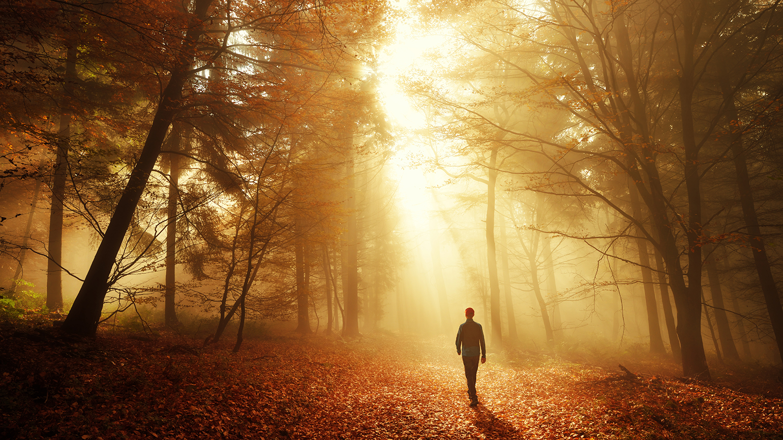 A man walks through an autumnal forest