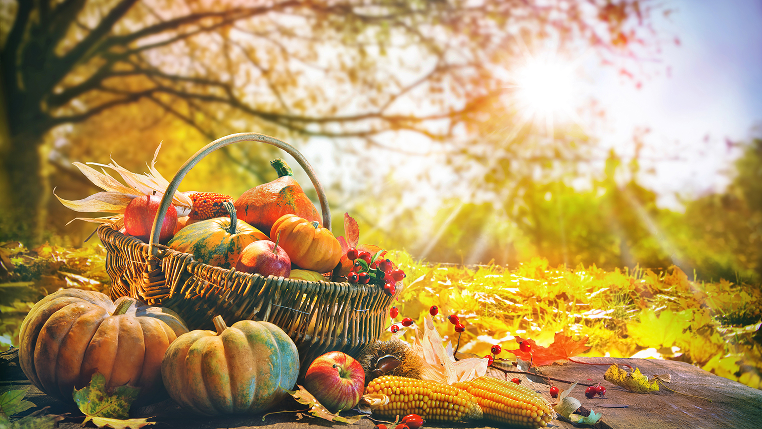 A basket of autumn gourds and fruit rests in a sundrenched field