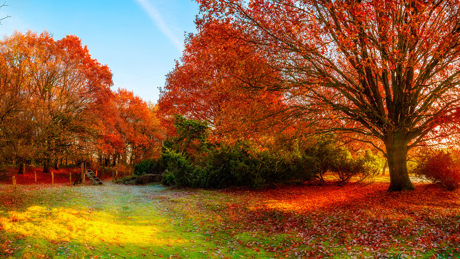 Brightly hued trees surround an autumn meadow