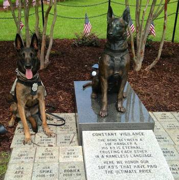 Ddoc at the Special Forces Canine monument, Fayetteville, NC. Photo courtesy of Sgt. Chloe Wells)