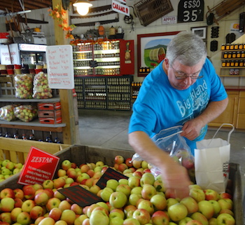 Michelle's husband selects autumn apples.
