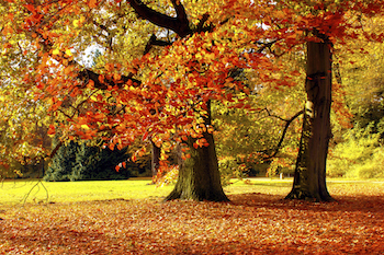 Photo of autumn leaves by stockfotoart for Thinkstock by Getty Images