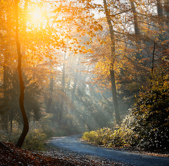 A forest scene filled with light. Photo by Balazs Kovacs Images for Shutterstock.