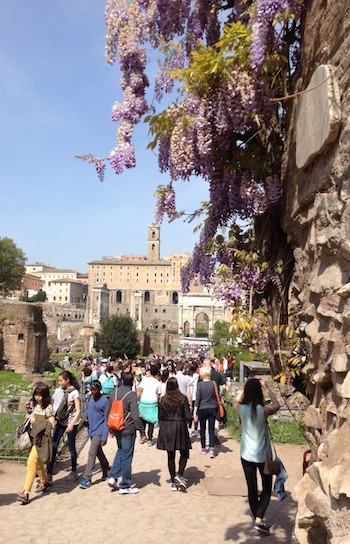 Wisteria blooming among the ruins of Rome.