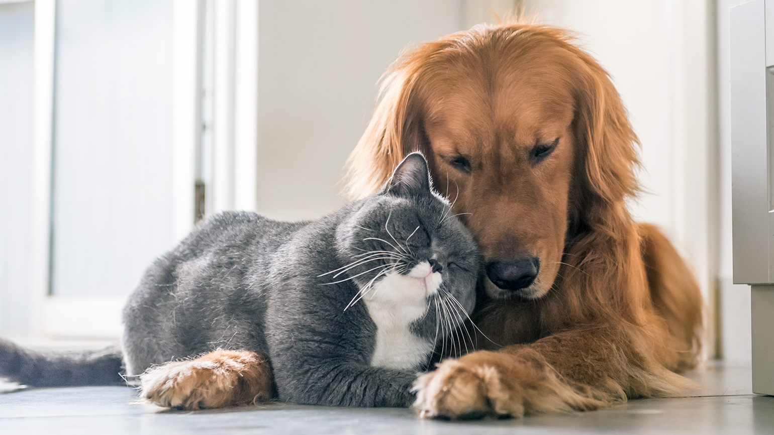 A dog and a cat show affection to each other