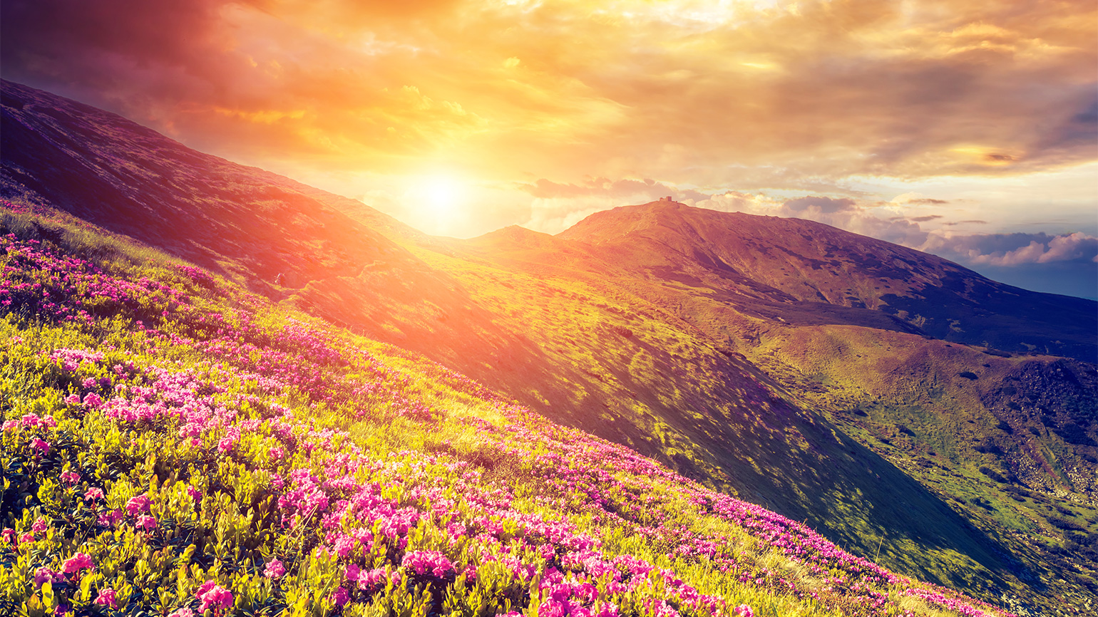 Flowers on a mountainside