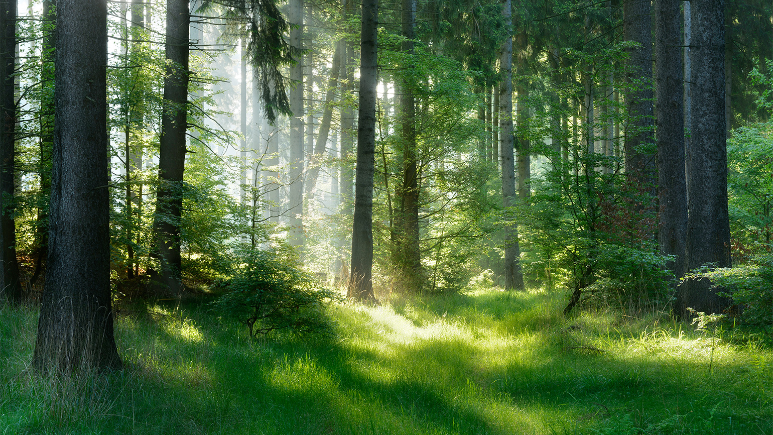 Sunbeams stream into a forest glade