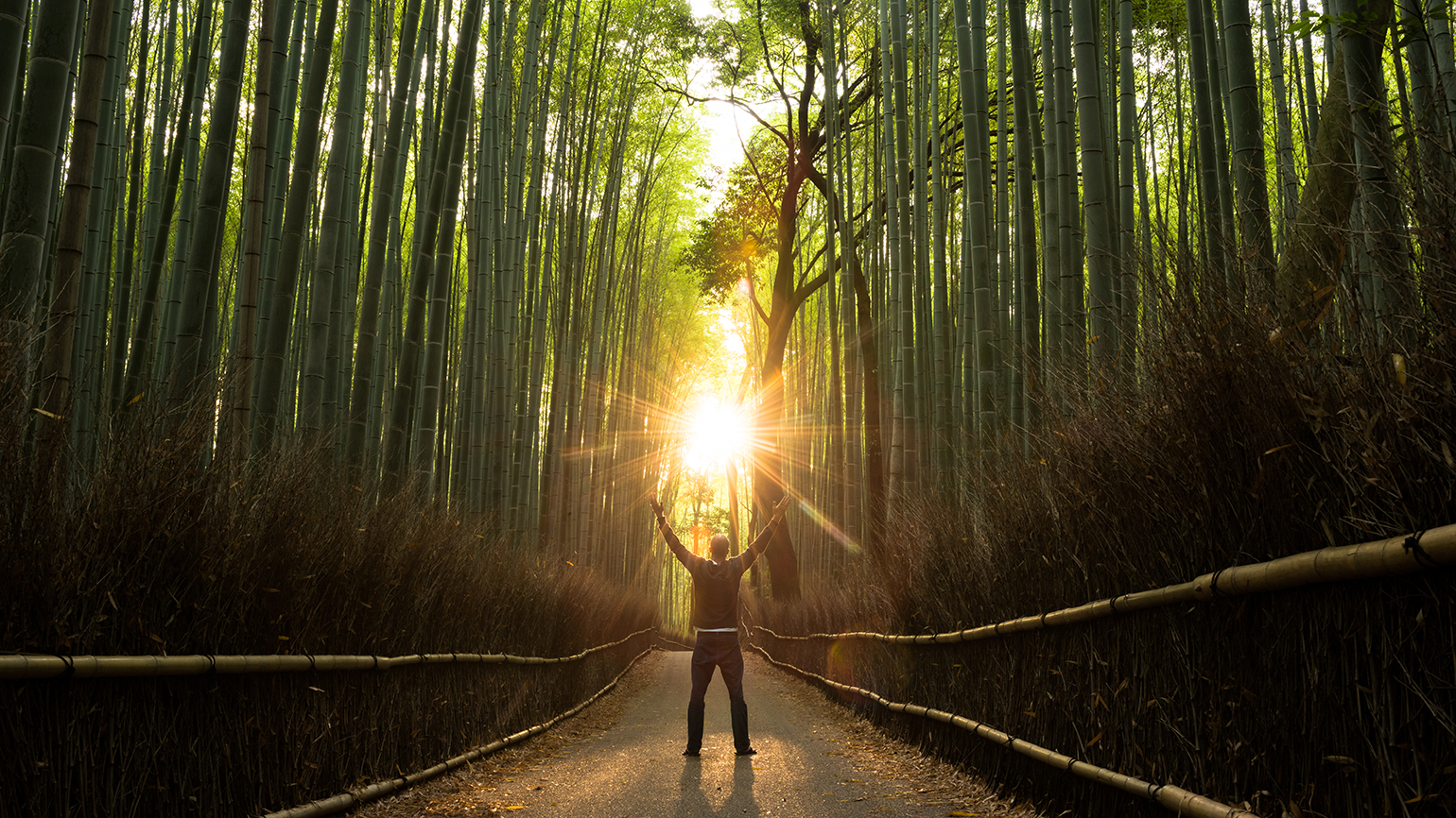 A man stands, arms raised, on a path through a bamboo forest at sunrise