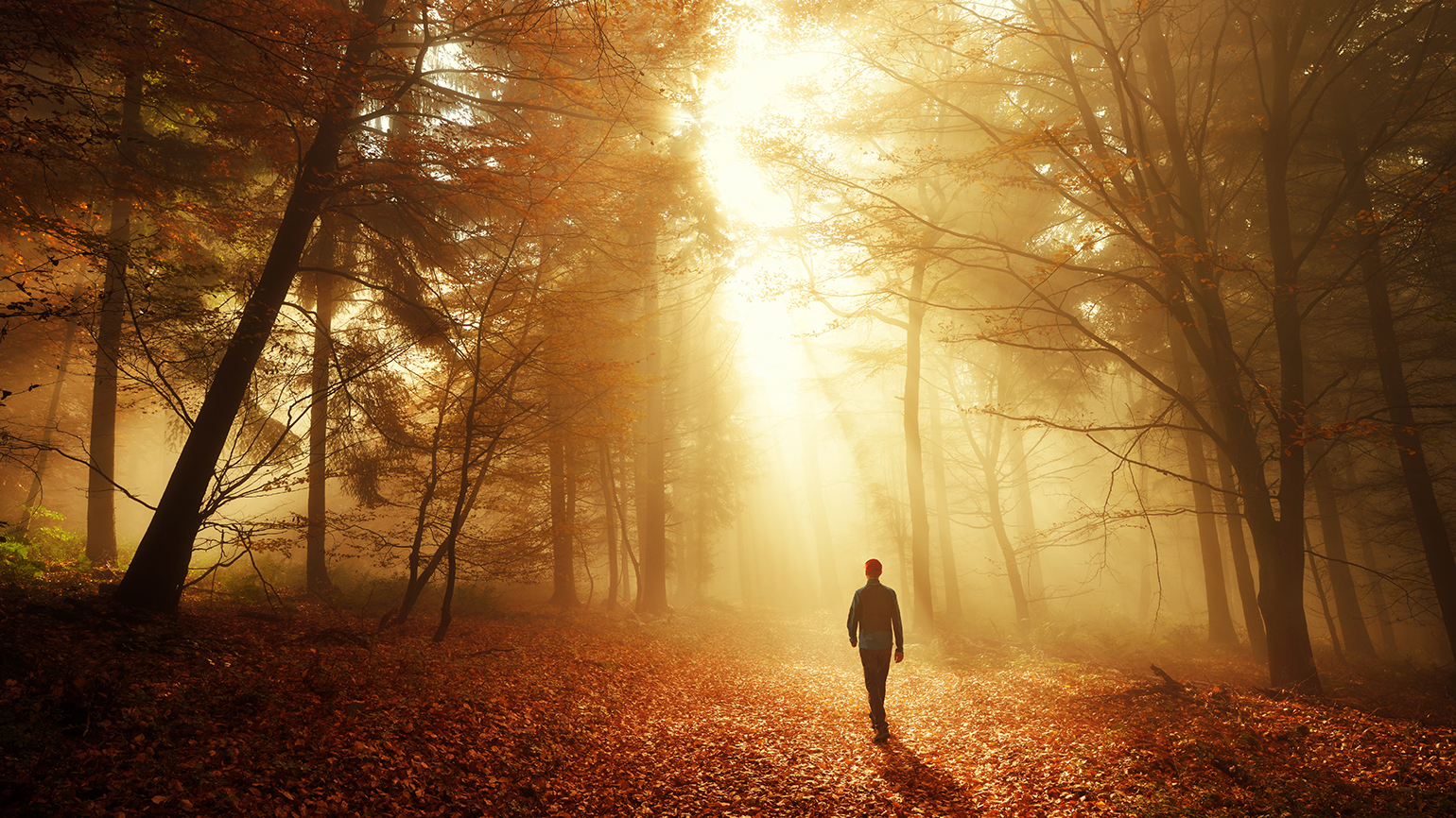 A woman walks in the woods on an autumn afternoon