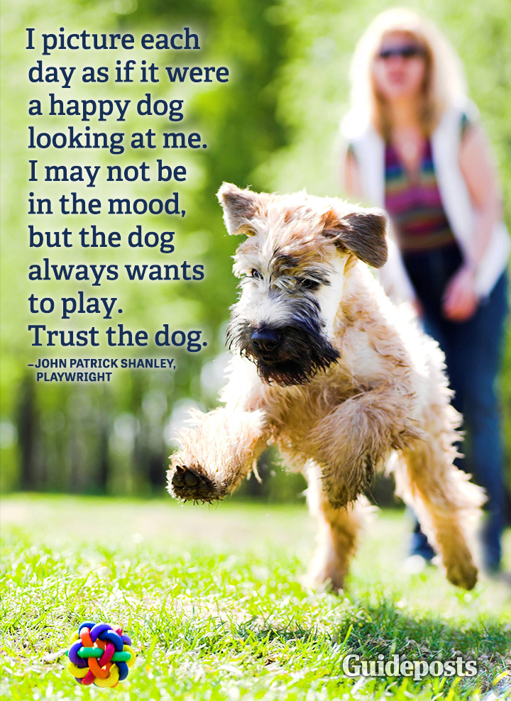 Happiness quote John Patrick Shanley dogs pets