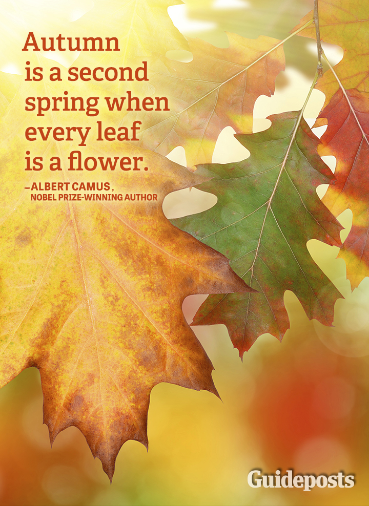 Autumn quote spring flowers leaves Albert Camus