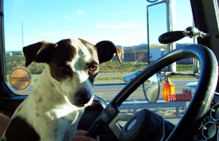 Pets: Prayer and God helped man find lost dog