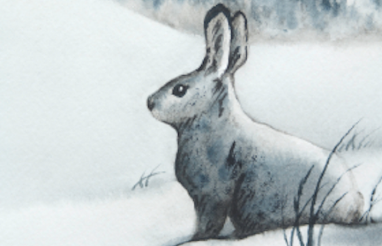 Illustration of a white snowshoe hare