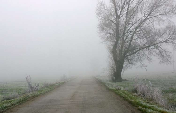 Thick fog on a country road