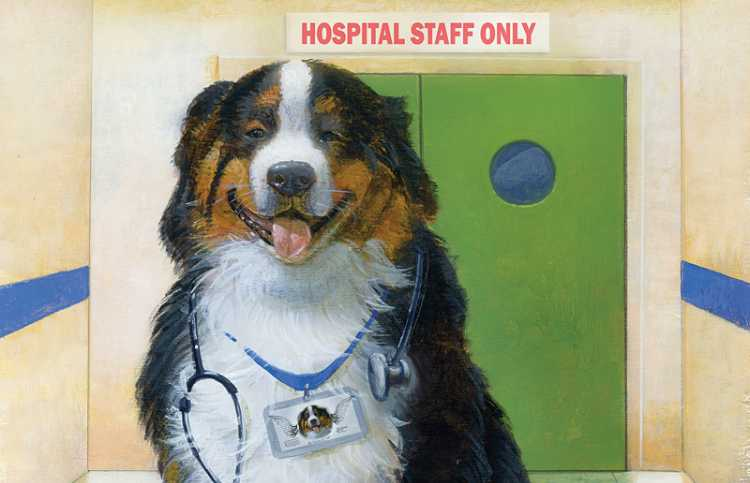 An artist's rendering of a Bernese Mountain Dog wearing a stethoscope