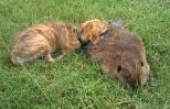 Bella the dog cuddles up to her departed friend, Beavis the beaver.