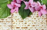 Manna and pink flowers for passover