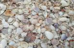 Shells on the beach. Photo by Diana Aydin.