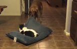 This cat isn't moving despite the dog's efforts.