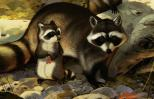 Artist's rendering of a mother raccoon and her child