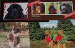 Holiday cards that support animal causes.