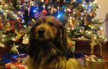 Should a pet be under the tree this Christmas? Photo courtesy Peggy Frezon.