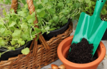 garden tools, seeds and potting soil.