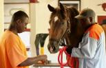 Inmates spend quality time with a retired racehorse.