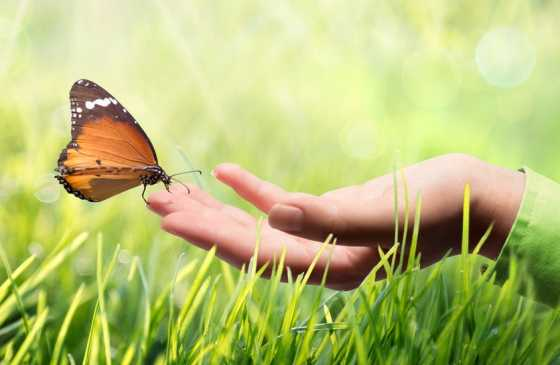 open hand with a butterfly