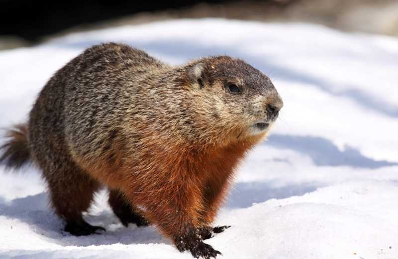 Confront Your Shadow on Groundhog's Day