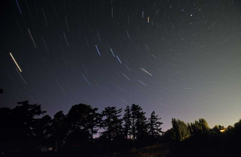 Shooting stars over trees in a beautiful night sky