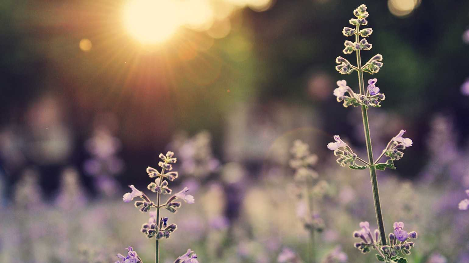 """Ask Jesus to make you like a beautiful """"well-watered garden."""""""
