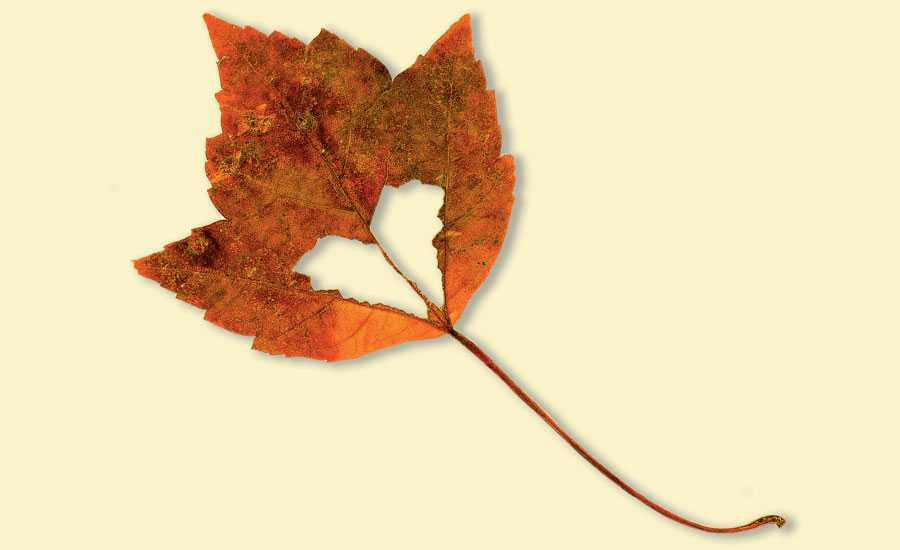 Heart-shaped leaf sign of hope and God's love
