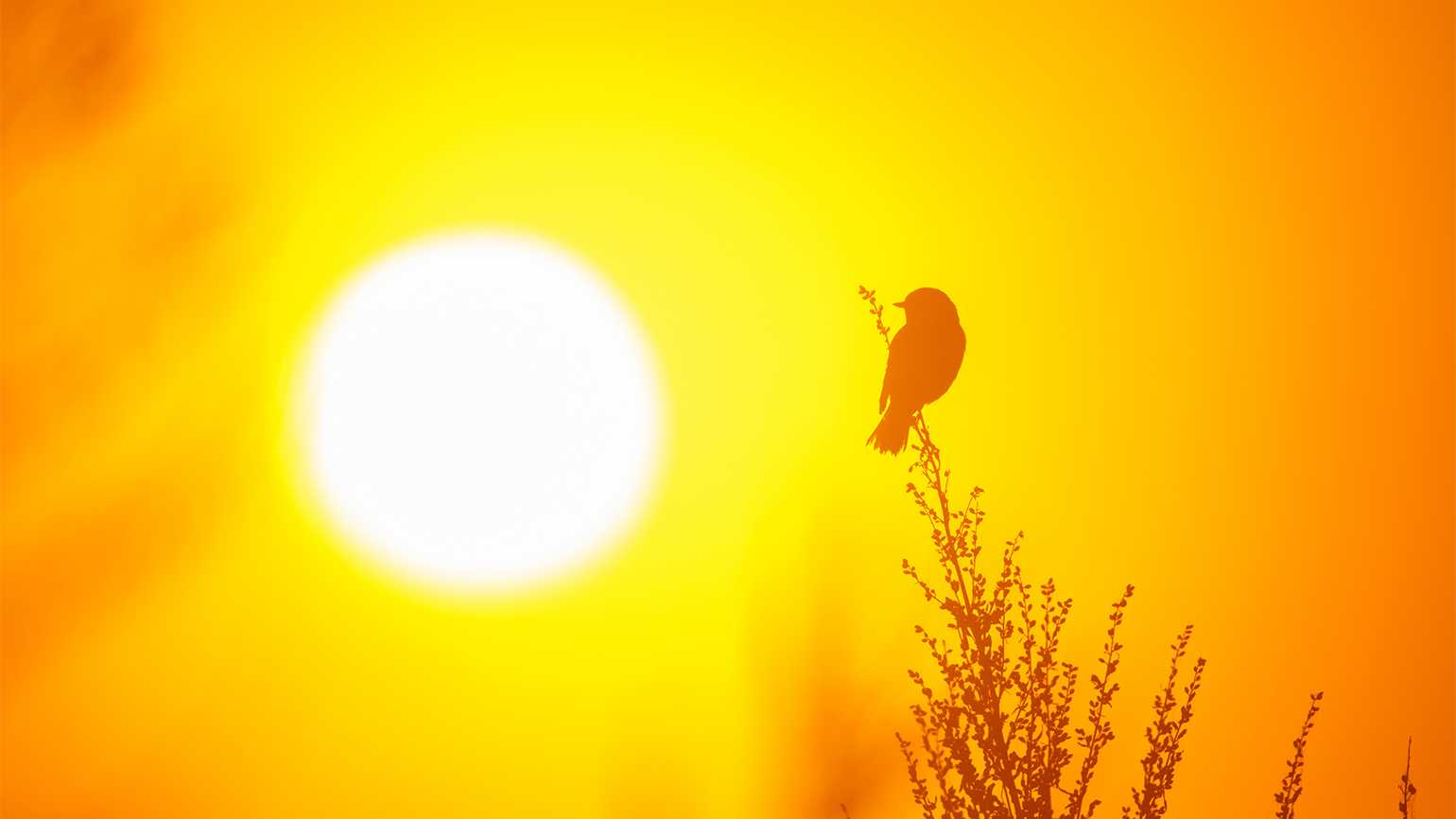 A small bird perches on a branch in the warmth of the sun