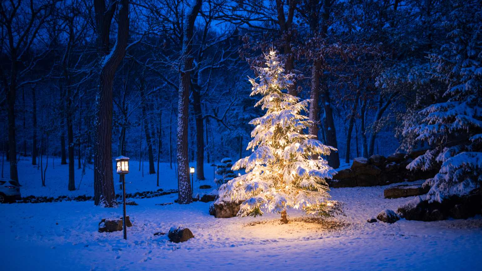 Christmas Forest.7 Things Christmas Teaches Us About Hope Guideposts