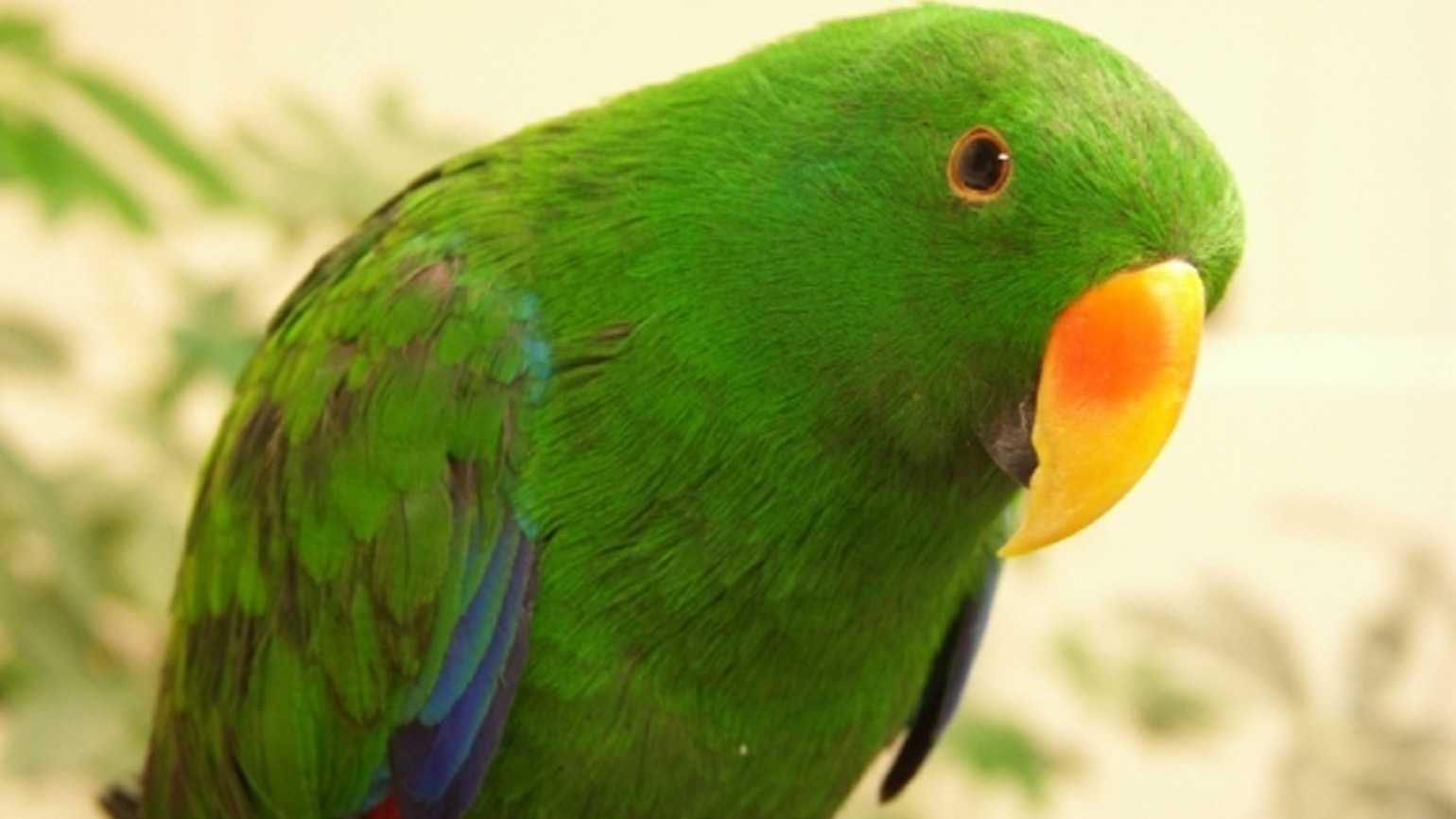 close-up of a vibrant green parrot