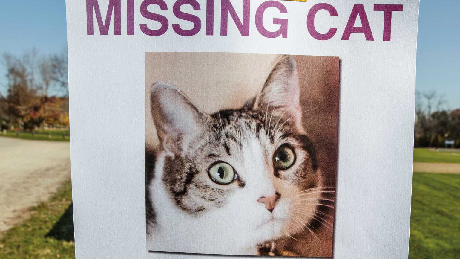A missing cat poster taped onto a wooden post.