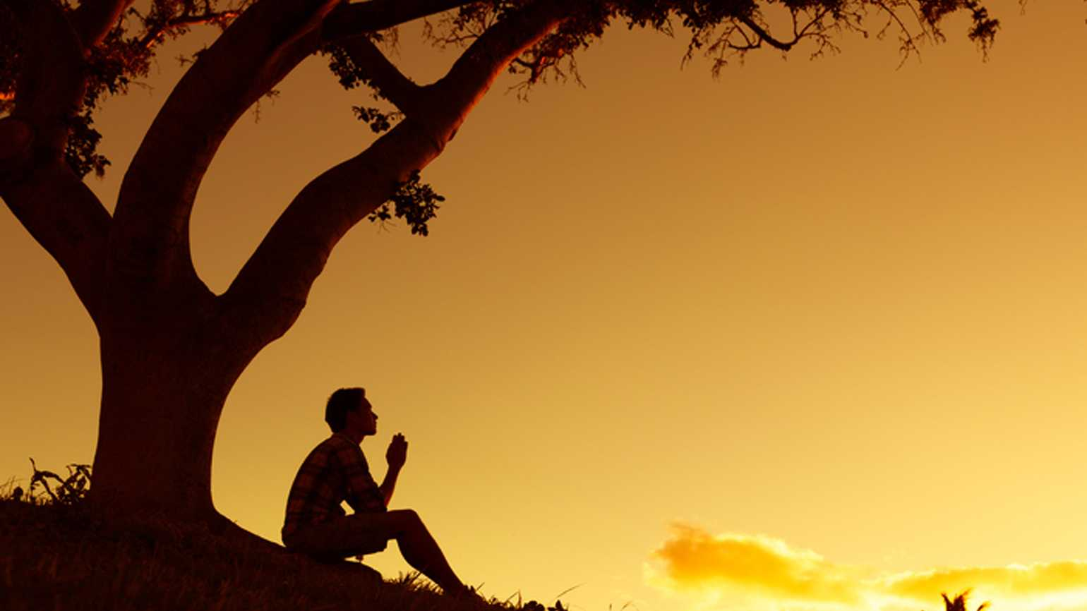 Man under a tree looking up to God in prayer.