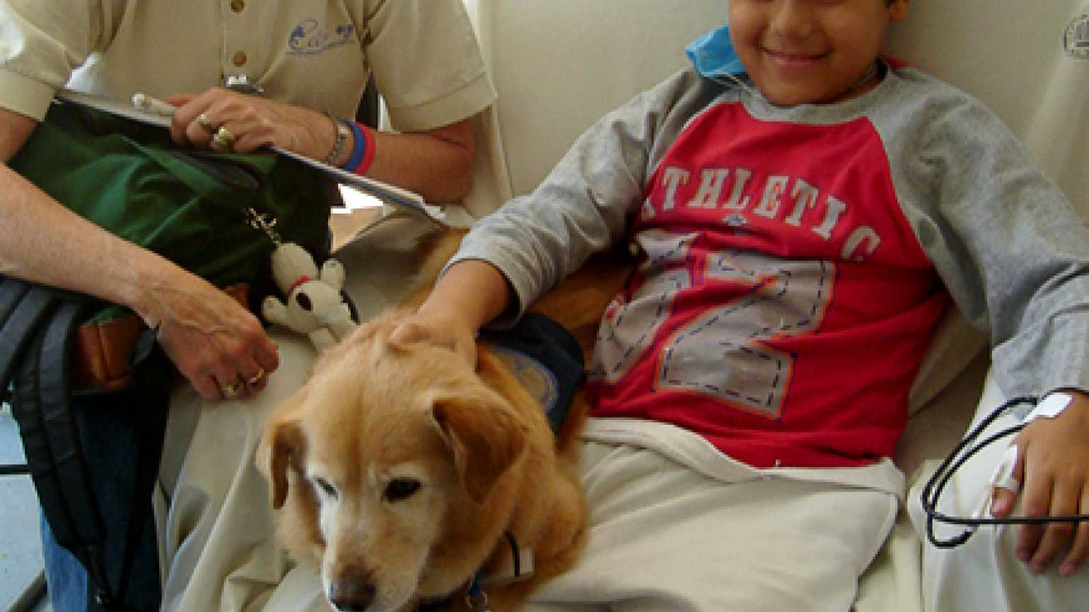 Pets: Animal therapy heals patients