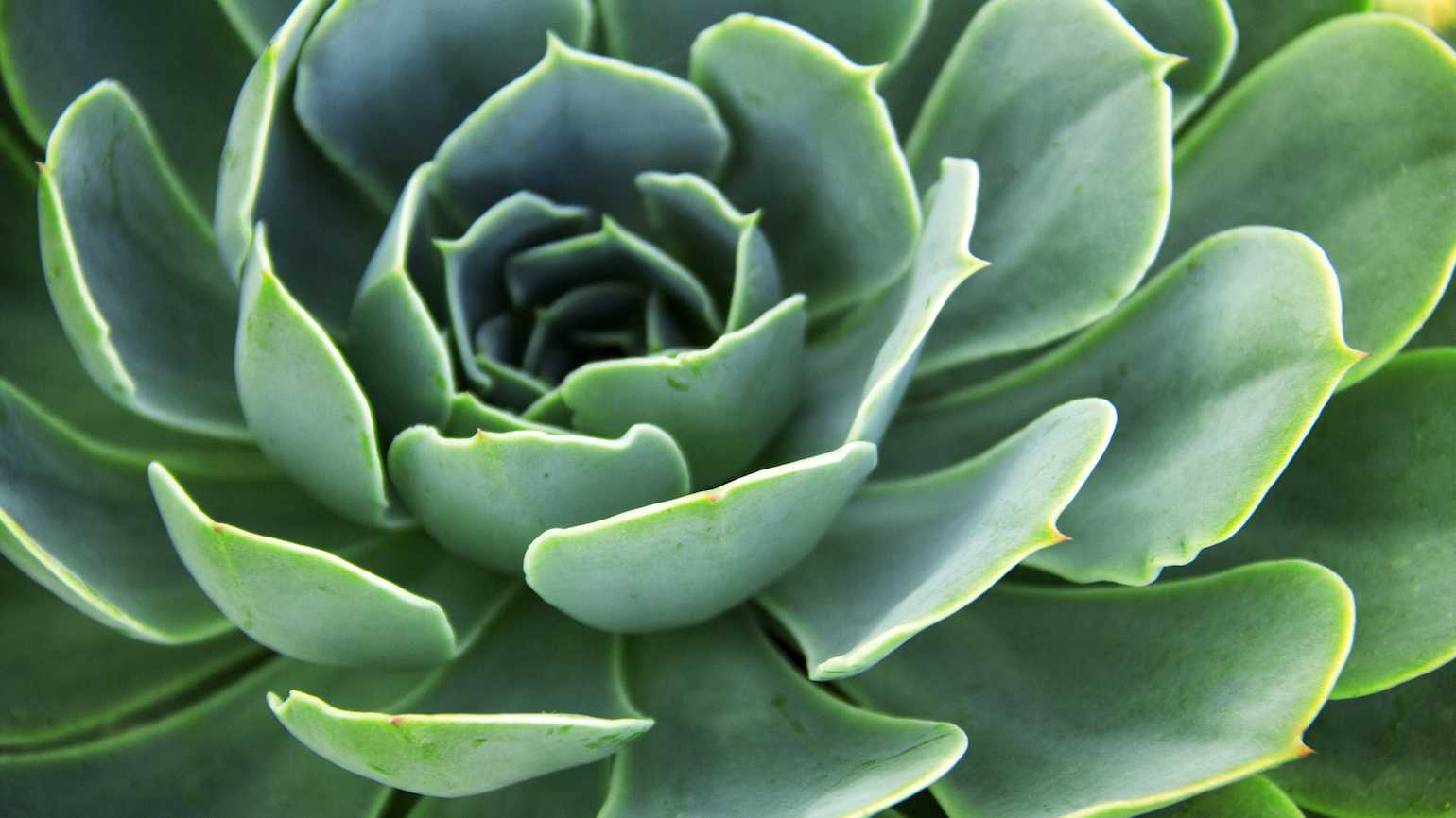 What a succulent plant can teach you