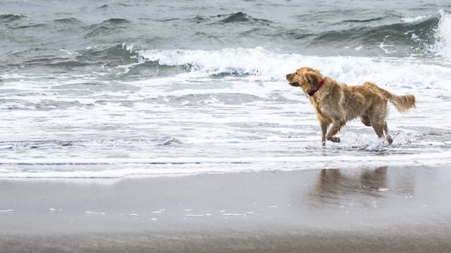 A golden retriever brought back memories of a family beach house.