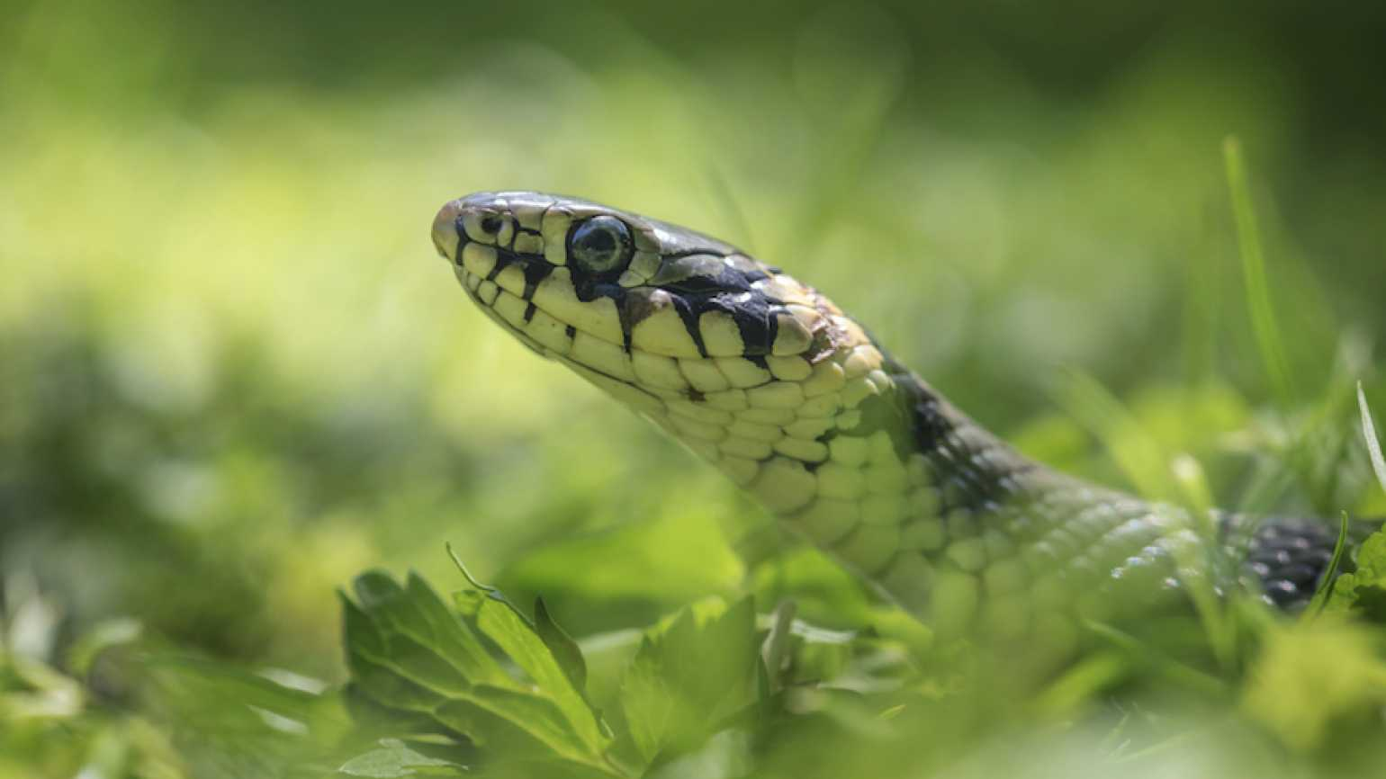 Snakes in the Backyard | Guideposts