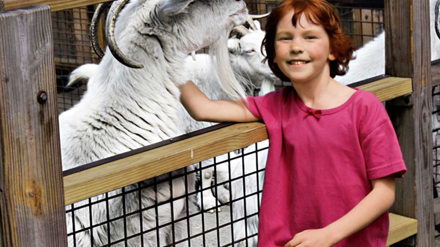 Catherine Hubbard pets a goat in a pen.