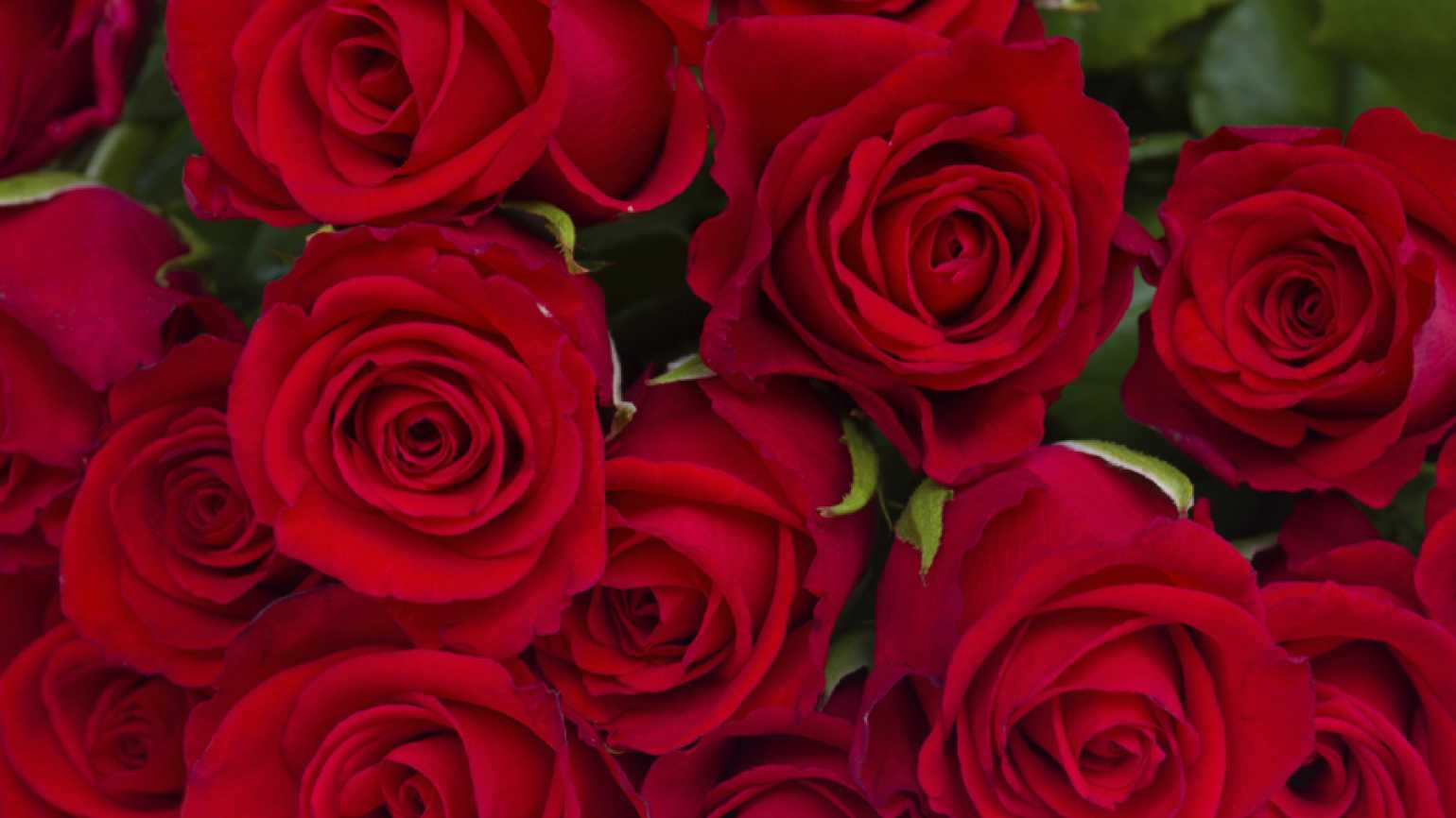 Beautiful bouquet of red roses