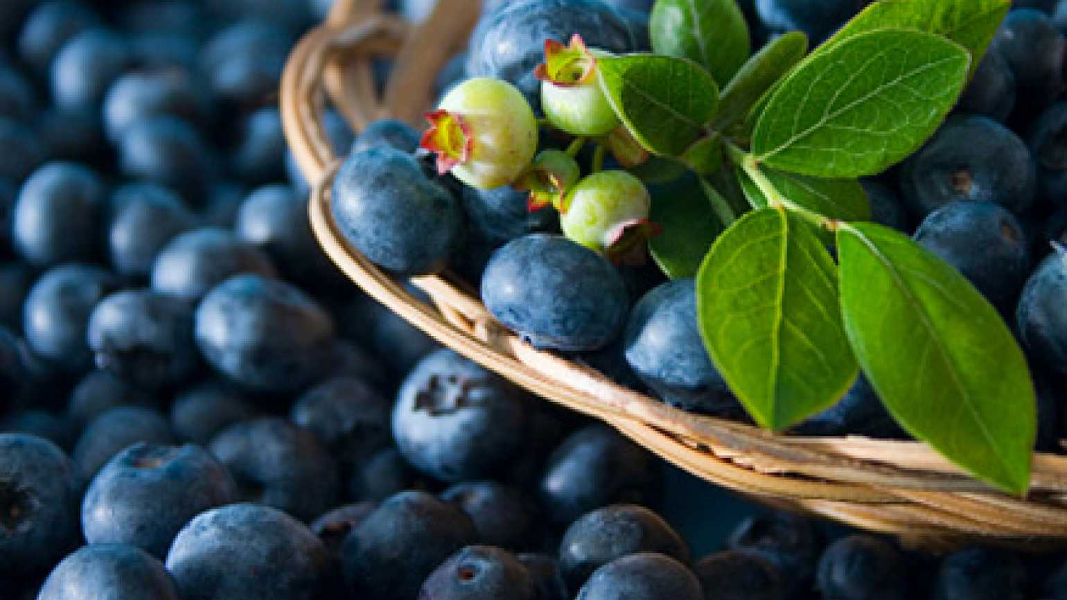 Fresh blueberries spilling out of a basket