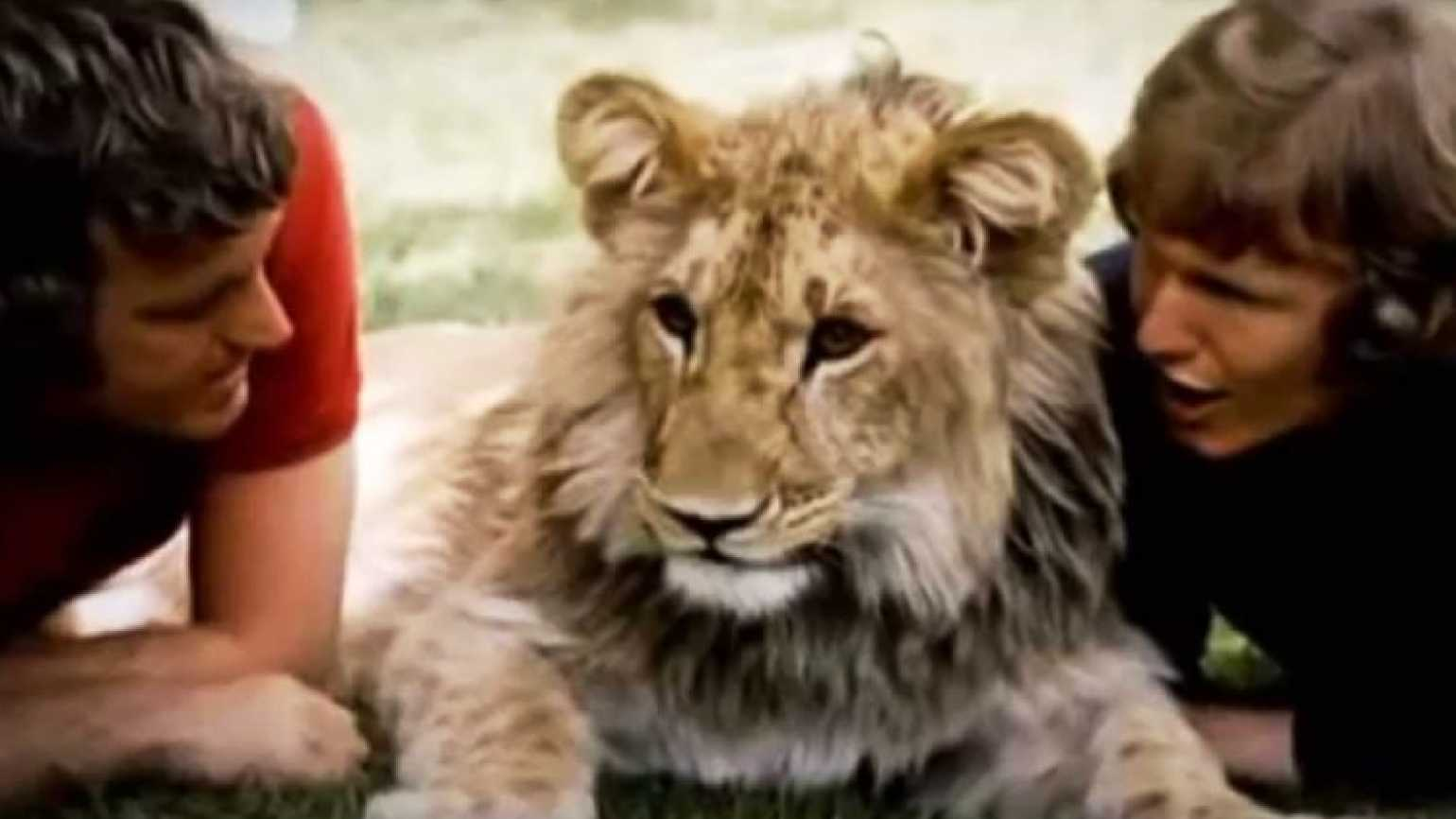 Christian the Lion: Proof animals know love