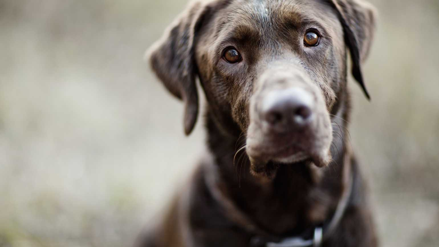 Loving a New Dog After Grieving Loss of Beloved Pet
