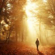 Man walking towards the sunlight in a forest