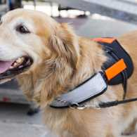 How assistance dogs help military veterans and those suffering from PTSD.