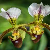 Lady slipper orchids, Doing the Lord's Work, Guideposts